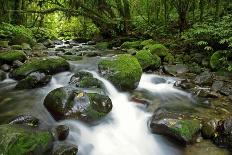 New Zealand forest stream