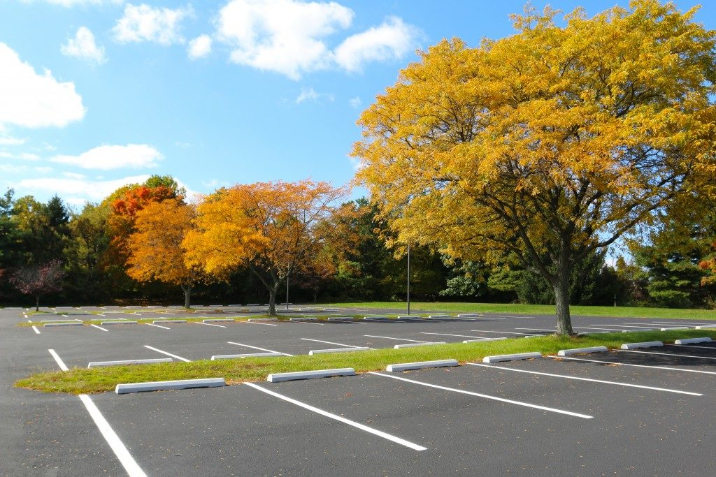 Asphalt parking lot trees